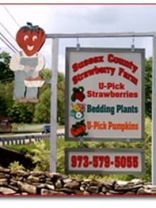 Sussex County Strawberry Farm